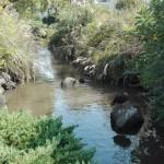 一之江境川親水公園にカモと鯉がいました。ガラスコーティング NSコーポレーション